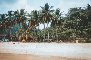 Palmbomen op eiland Maleisie